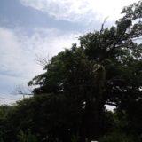 景色を見ながら歩くと緑生い茂る大木
